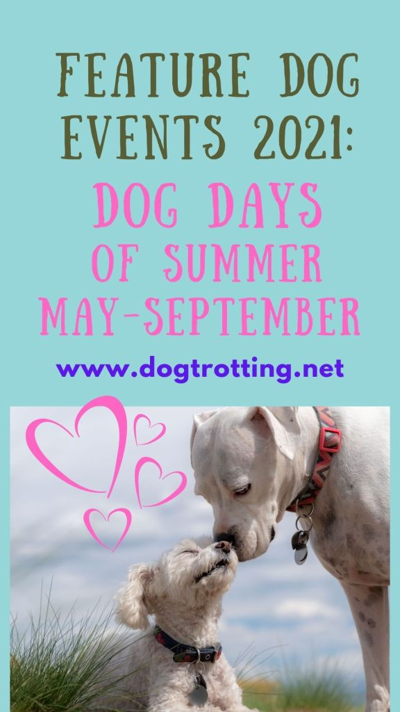 dog days of summer promo poster with two white dogs dogtrotting.net