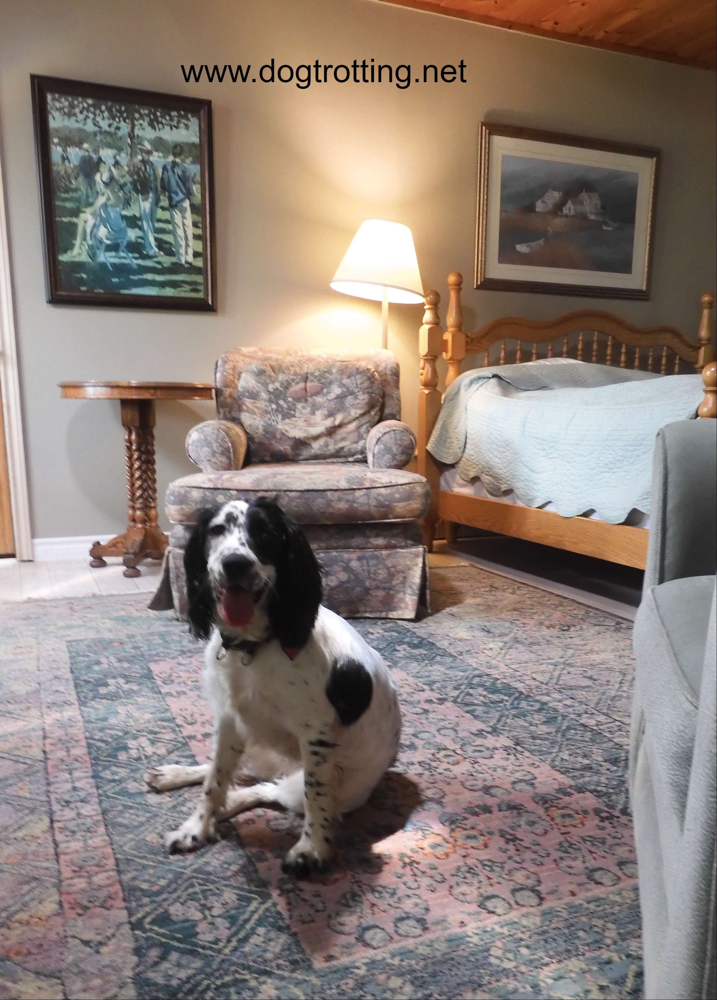 black and white dog in a room at Woodhaven Dog friendly Resort in Buckhorn, Ontario