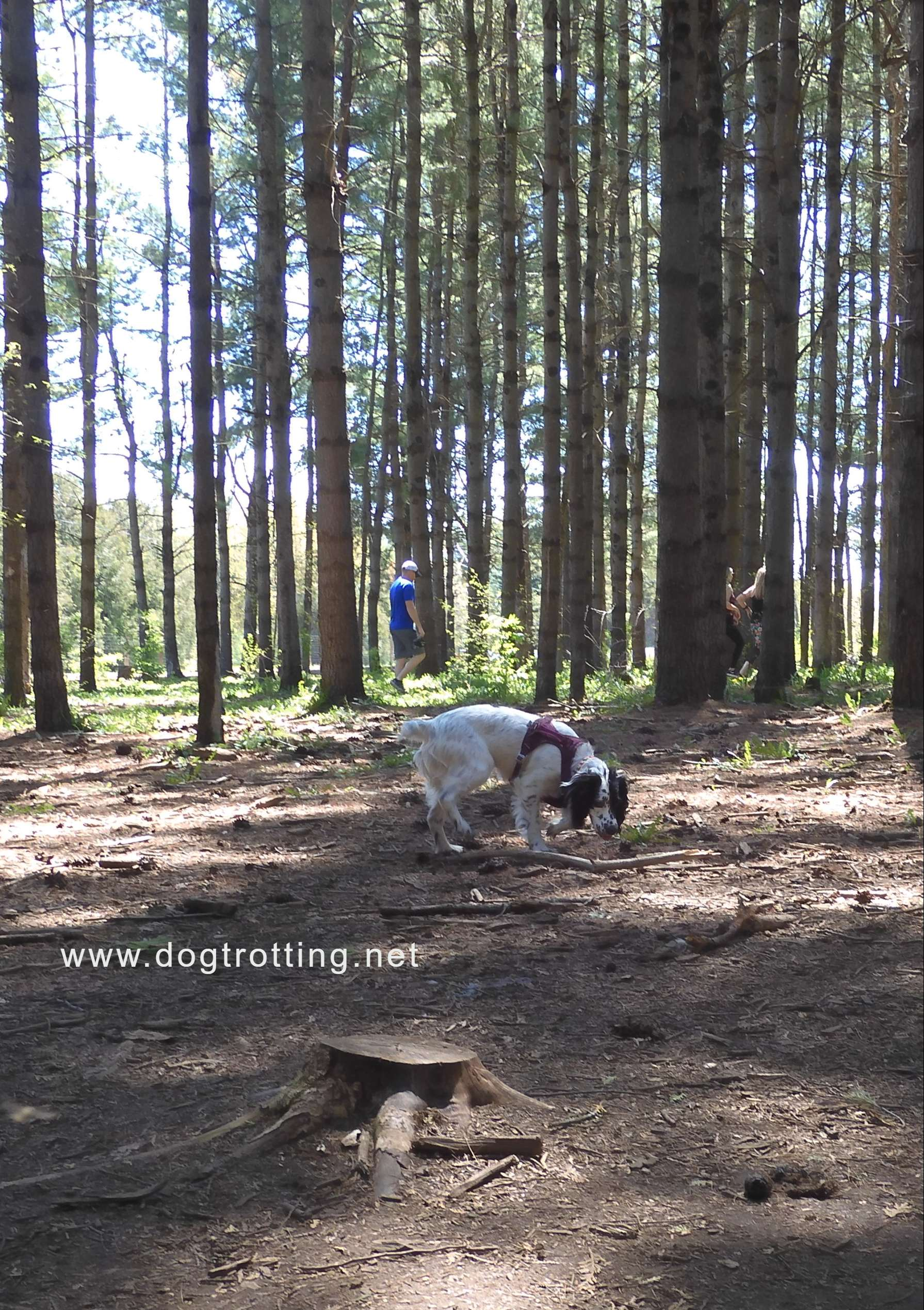 Dog in the woods at Ferguson Forest Leash Free Dog Park in Kemptville Ontario