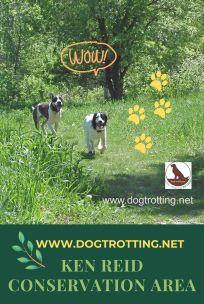 dogs running leash free in Ken Reid Conservation area Lindsey, Ontario