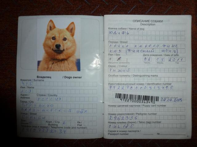 Ветеринарный паспорт для кошки — как получить и заполнить правильно. Как заполнить ветеринарный паспорт Вет паспорт