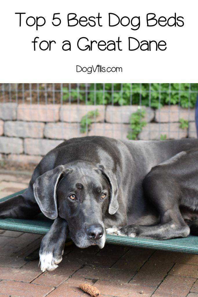 Ecowild Dog Bed : ecowild, Great, Danes