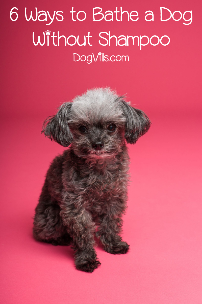 Can You Use Dove Body Wash On Dogs : Without, Shampoo, Http://www.dogvills.com
