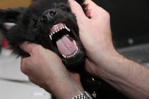 How to Clean your Dog's Teeth Naturally