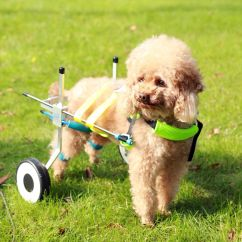 Wheel Chairs For Dogs Reclining Camping Mintbowl Dog Wheelchairs India