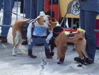 dog costume   Dog Wild