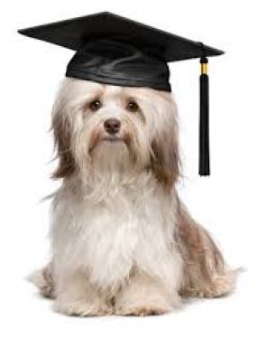 Dog wearing a graduation cap