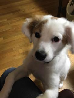 puppy Radar