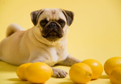 How Amazing Dog Moms Make Lemonade When Their Dogs Give Them Lemons