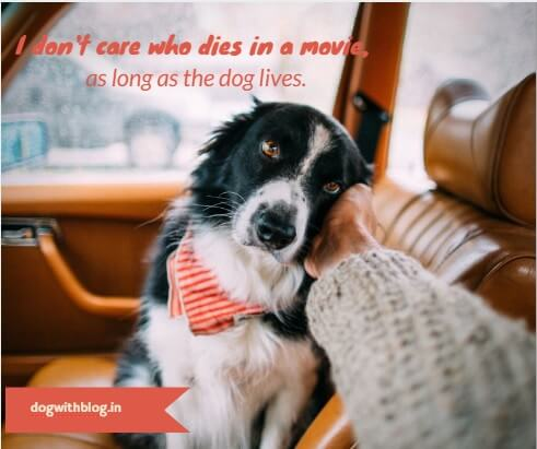 I don't care who dies in a movie,a s long as the dog lives.