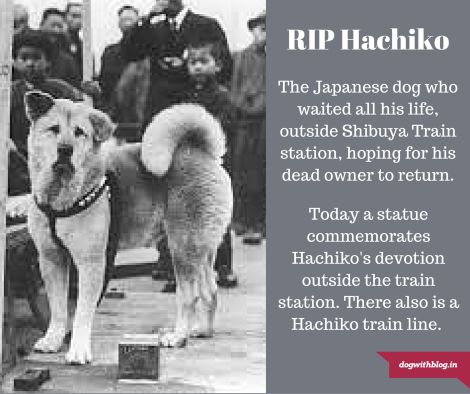 hachiko real photo