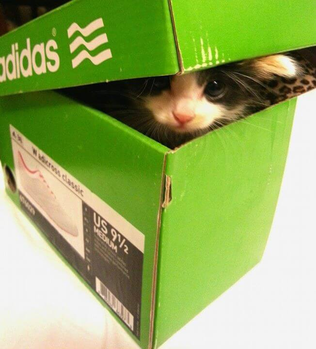 cat in the box