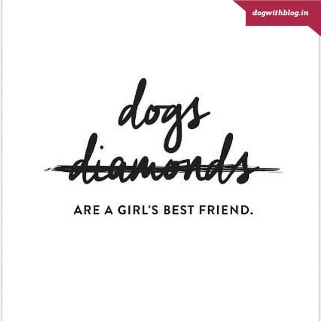 dogs are a girl's best friend too!