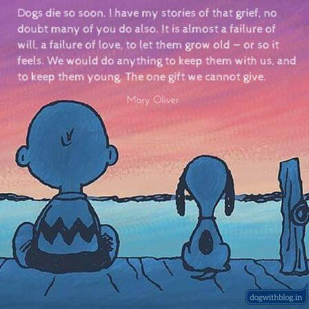 Dogs die quote - peanut mary oliver