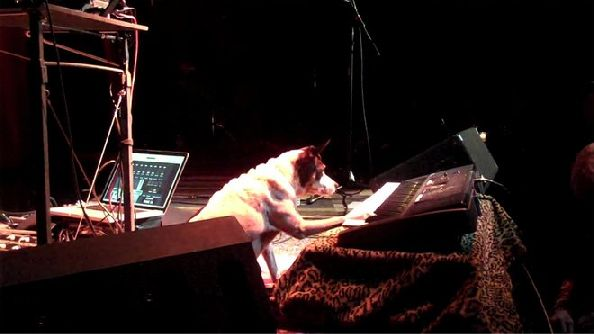 concert for dogs laurie anderson