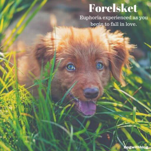Forelsket meaning