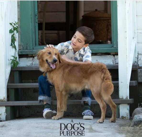 Movie review A Dog's Purpose