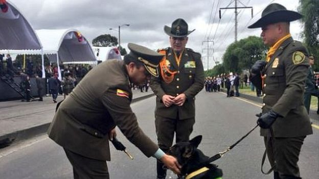 Colombia drug sniffer dog