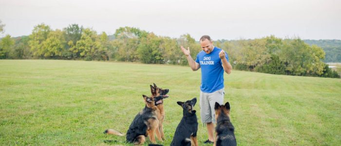 Chris White - D.O.G. Obedience Group Owner and Trainer