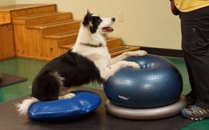 Dog sitting an inflatable cushion with front paws on a larger object with it's front paws.