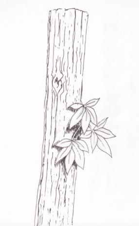 Leaves on Post