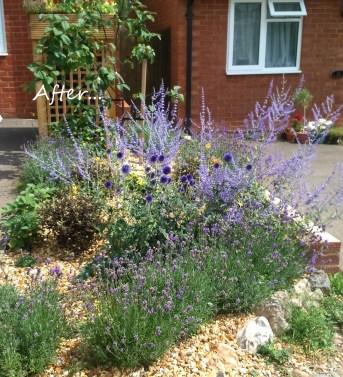 side garden after