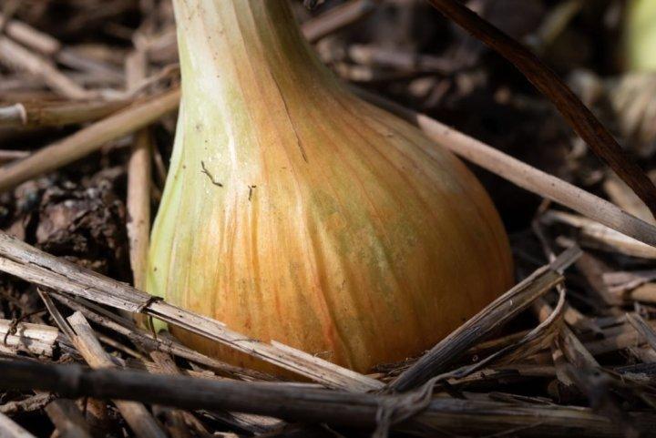 Organic and Heirloom Seeds