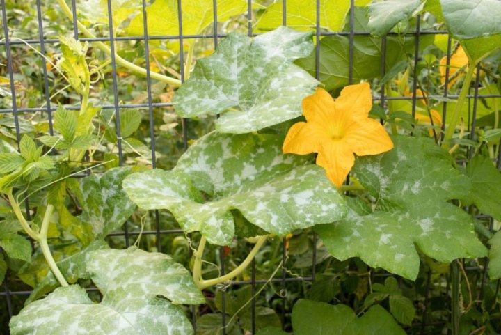 Fertilizer in the vegetable garden