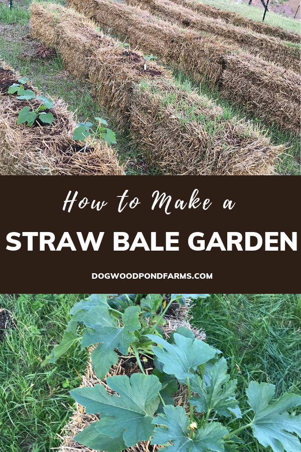 Vegetable gardening in straw bales is easy and fun