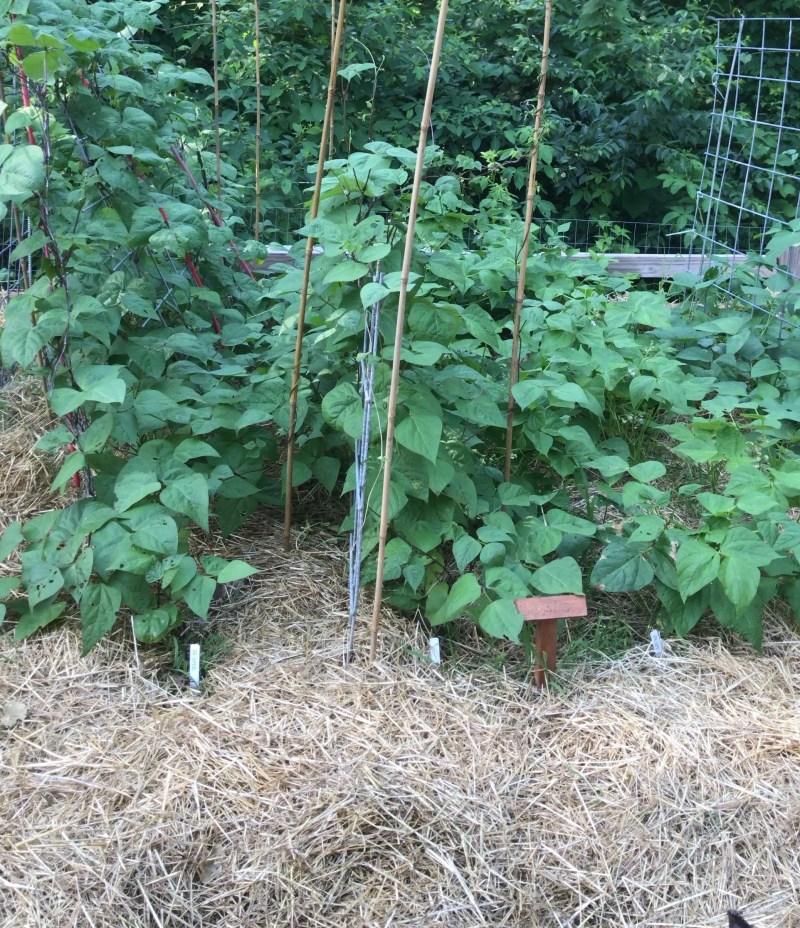 easy vegetable gardening for beginners