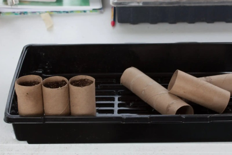 Fill toilet paper rolls with dirt