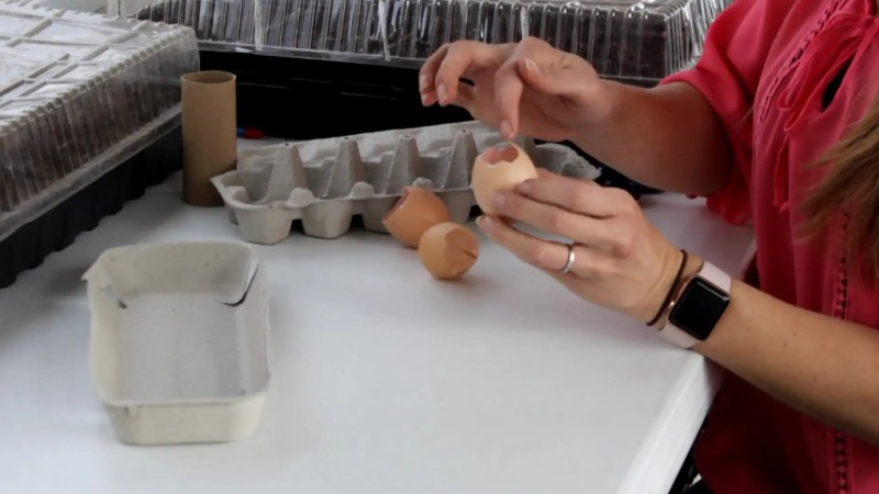 Egg shells as seed starting containers