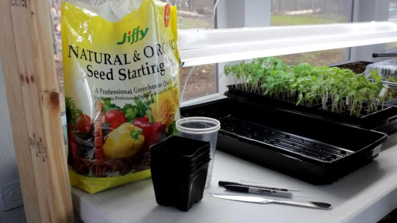 Transplant vegetables that you grow