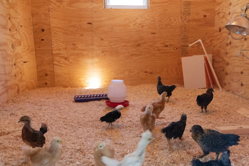 Tour the new brooder house at Dogwood Pond Farms