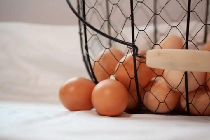 Benefits of Raising Chickens