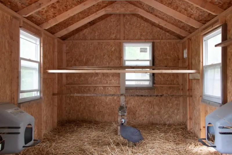 What you need for your backyard chicken coop and chicken run