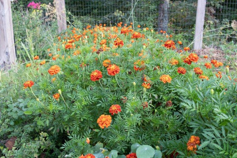 Natural Garden Living