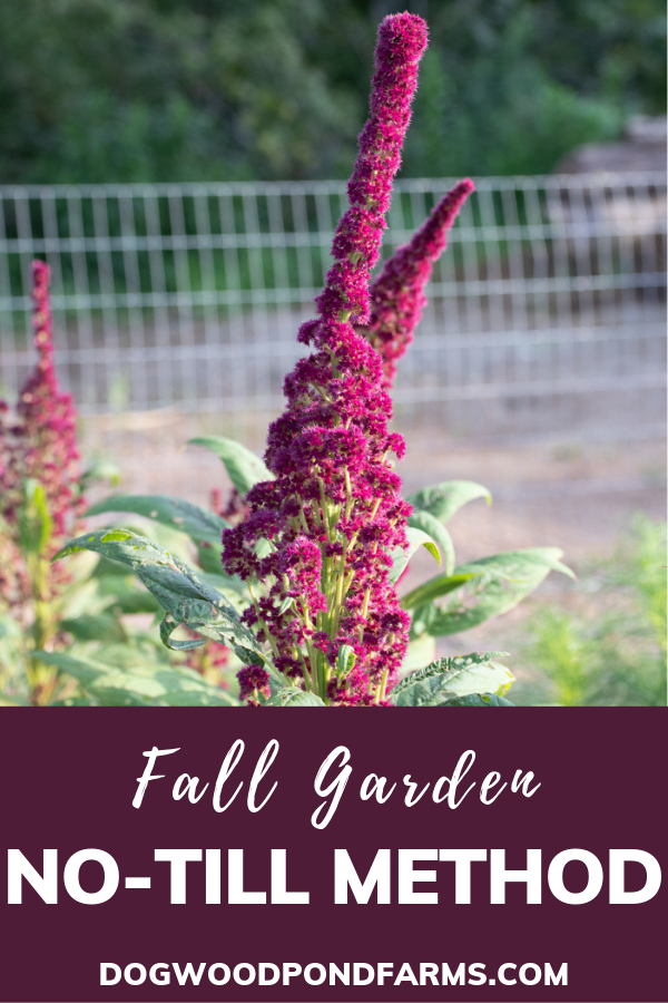 Fall Garden at Dogwood Pond Farms
