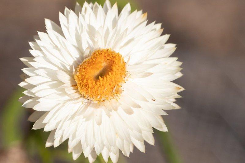 Favorite Heirloom Seeds in the Garden