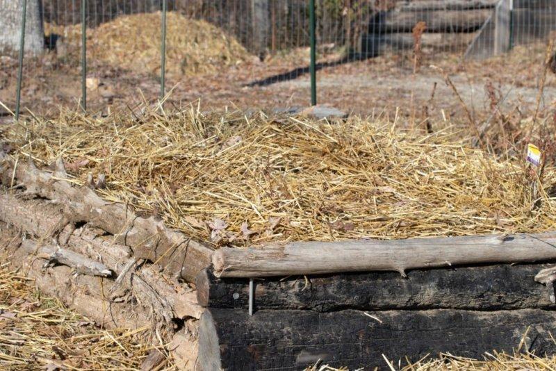 Mulch looks pretty in the garden