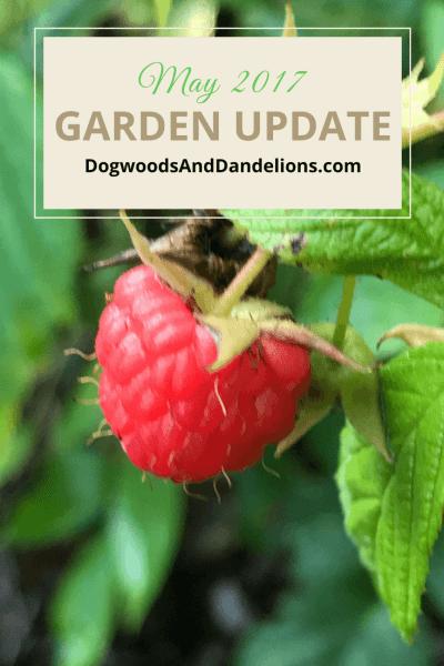 May 2017 Garden Update