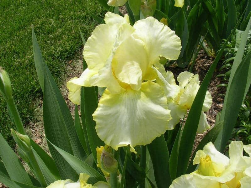 Total Recall Iris