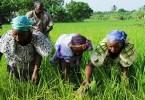 Afrique4 pays point de consacrer 10 budget secteur agricole