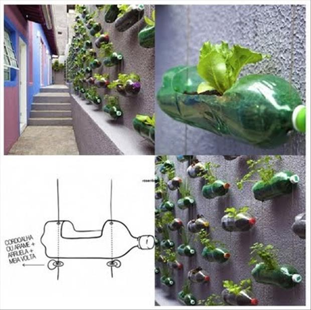 2 Liter Soda Bottle Wall Garden – Do It And How