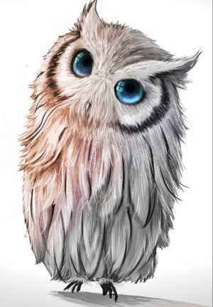 owl drawing realistic easy colorful step