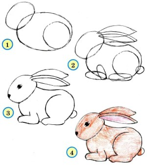 draw animals easy rabbit drawing pencil step animal painting before
