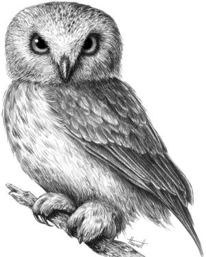 owl easy drawing draw realistic step colorful way tutorials