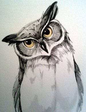 owl drawing realistic easy step colorful advertisement tutorials