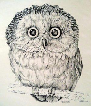 owl drawing easy realistic step sketch colorful tutorials advertisement