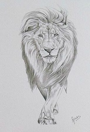 Lion Realistic Drawing : realistic, drawing, Drawing, Pencil, Before